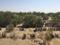 Karakum Desert2
