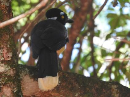 Bird, Iguazu Falls, Argentina