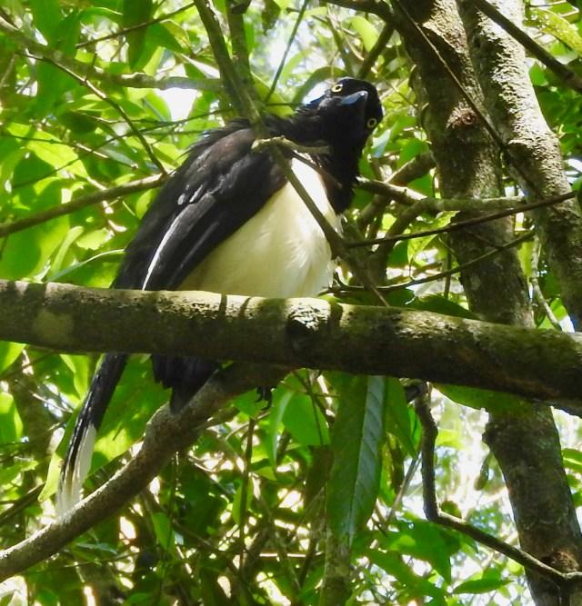 Bird at Iguaza Falls, Argentina