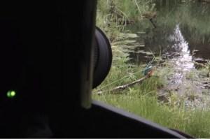 Ijsvogels filmen...