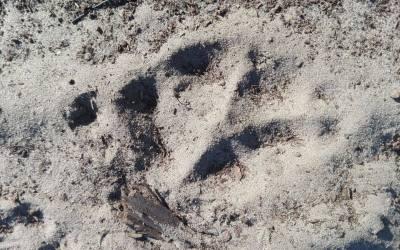 'Wild van Wolven' sporenweekend in Bosland
