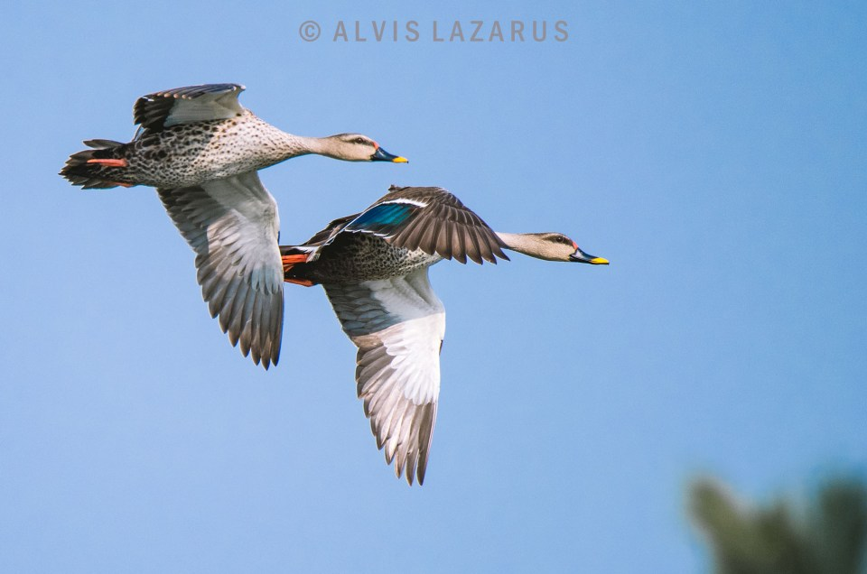 Bird Photography | How to capture birds in flight?