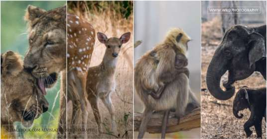 wildlife-photography learn-wildlife-photography wildlife-photographer-india wildlife-photographer-india wildlife-love-moments