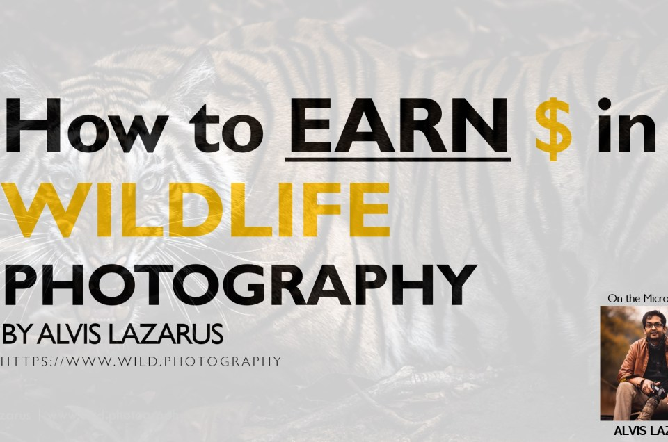 Earn Money Through Wildlife Photography Alvis Lazarus