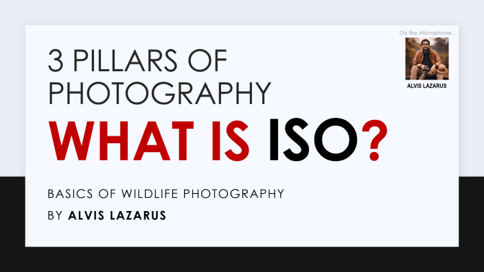 3 Pillars Of Photography What is ISO By Alvis Lazarus