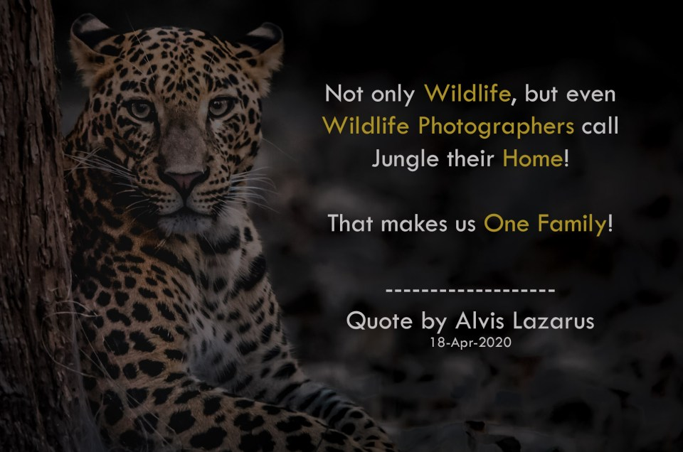 Wildlife Photographer Alvis Lazarus Quote