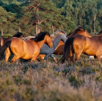 10 cool things to do with kids in the ancient forest of the New Forest