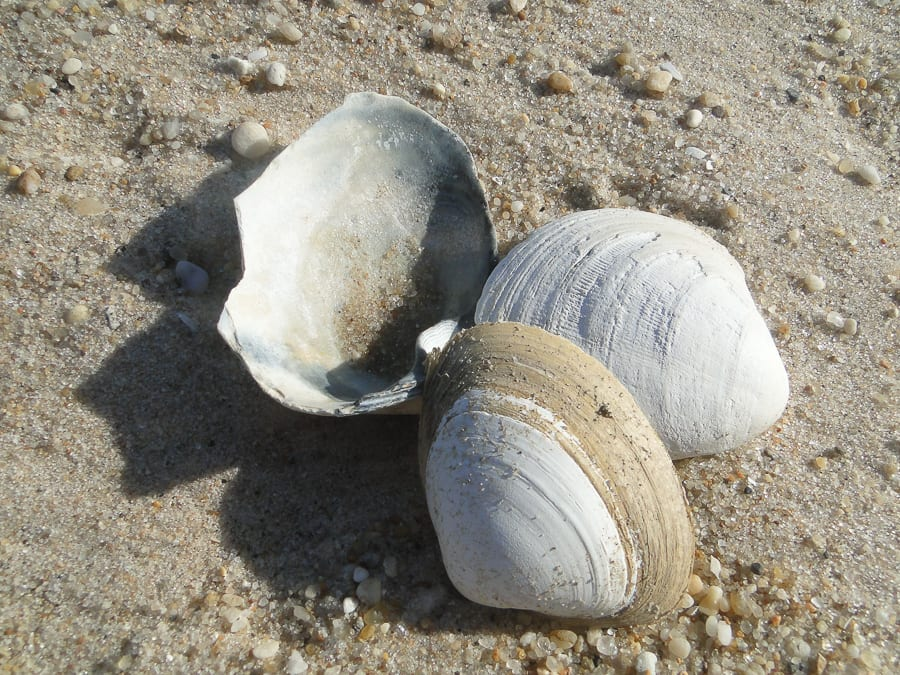 beach walk with kids shells