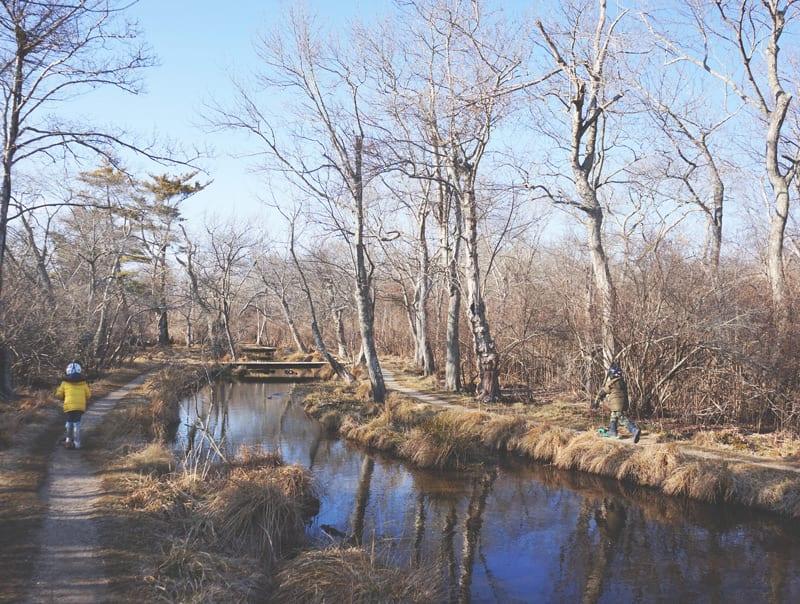 nature trail with bridges