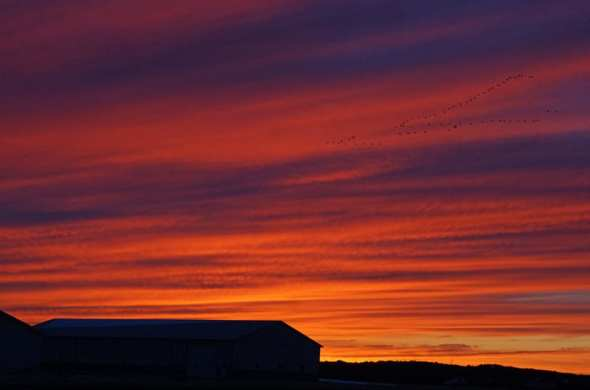 Sunset with geese in sky