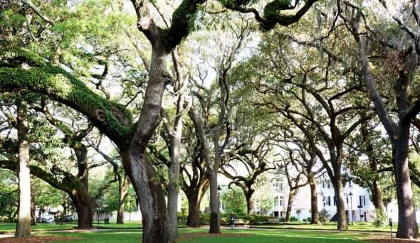 garden square savannah