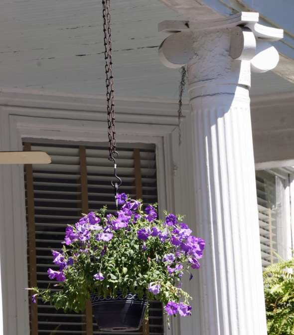 Hanging flower basket savannah