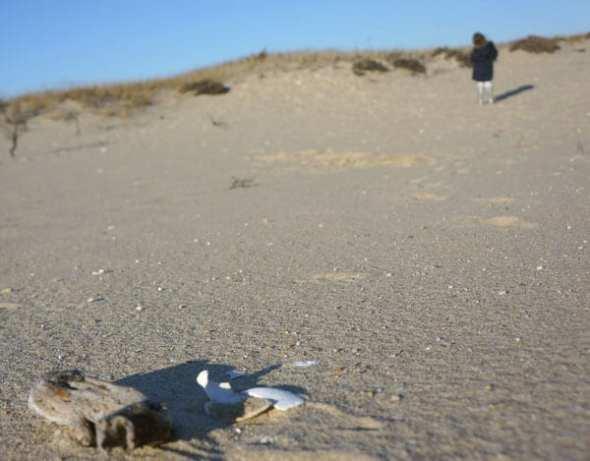secret sandpit