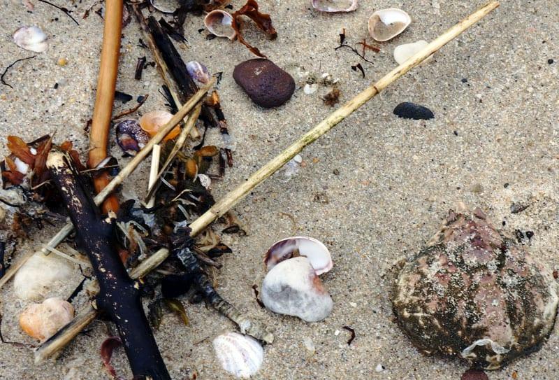 Beachcombing Alberts Landing