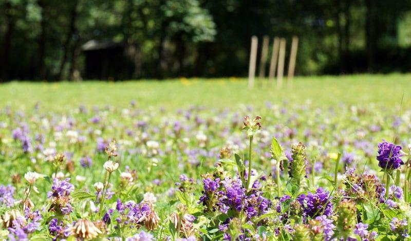 wqild flowers next cricket pitch