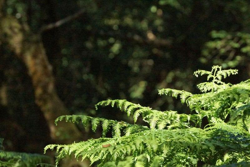 Light on ferns