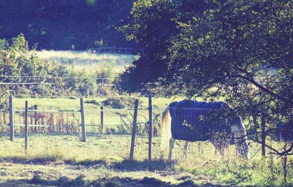 horse grazing under tree