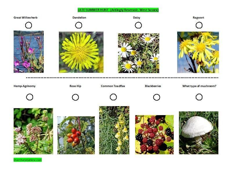 Spotter sheet late Summer Wild Plants