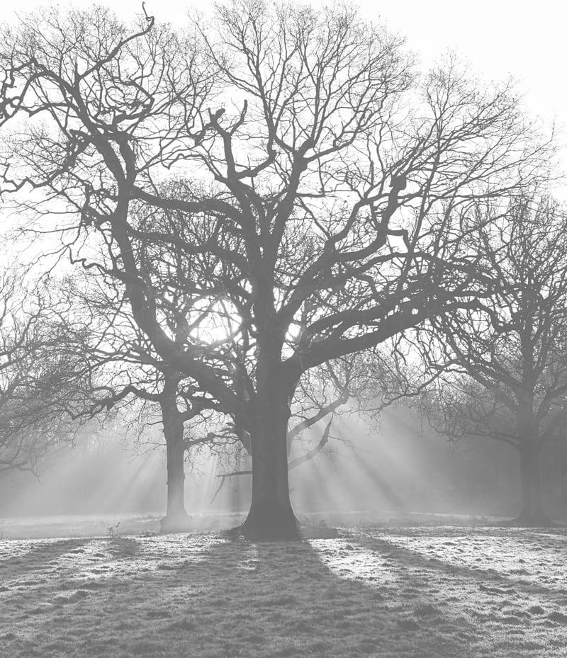sun rays frost trees