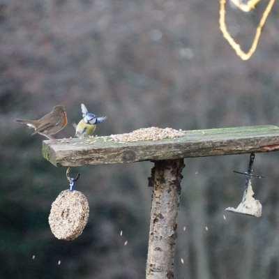 How do we get wild birds to our garden?