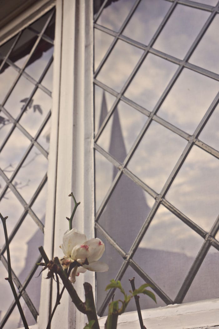 rose and window reflecting church spire