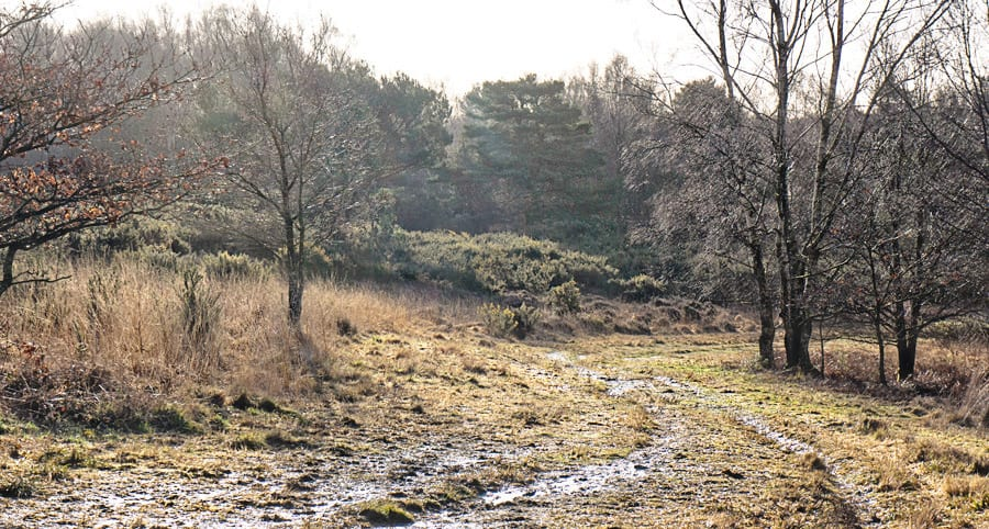 Ashdown Forest in February
