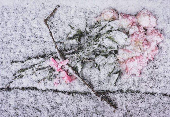 Flower bouquet covered in snow