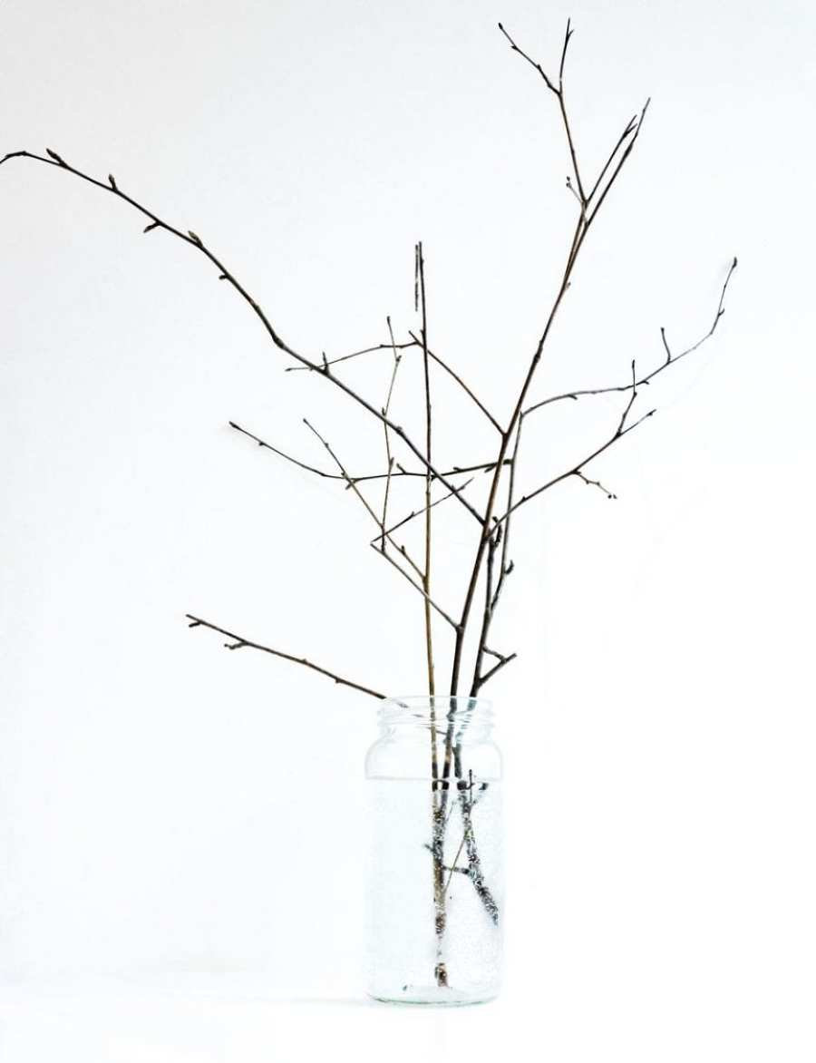 19 Feb Birch twigs with buds