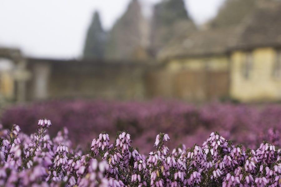 Wakehurst garden walls and heather