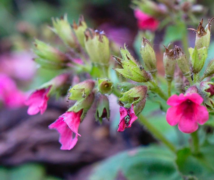 pink ground flowers