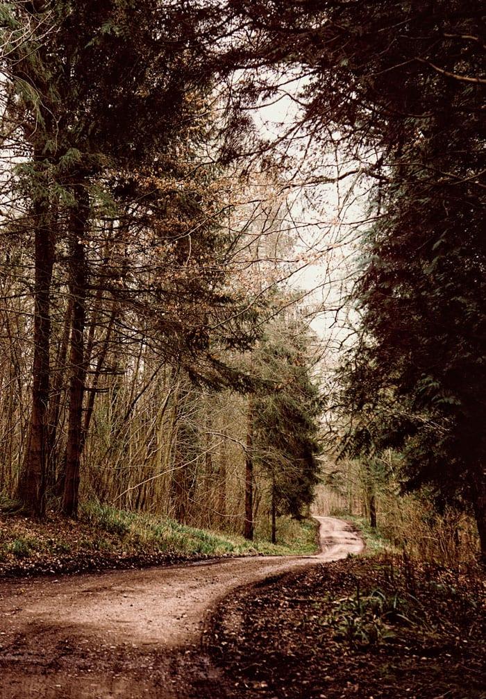 Road through woods West Sussex
