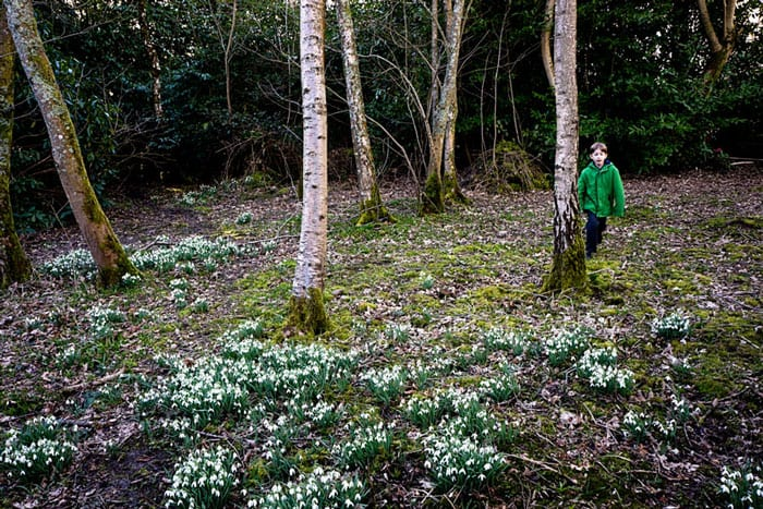 Wood clearing with snowdrops and Theo