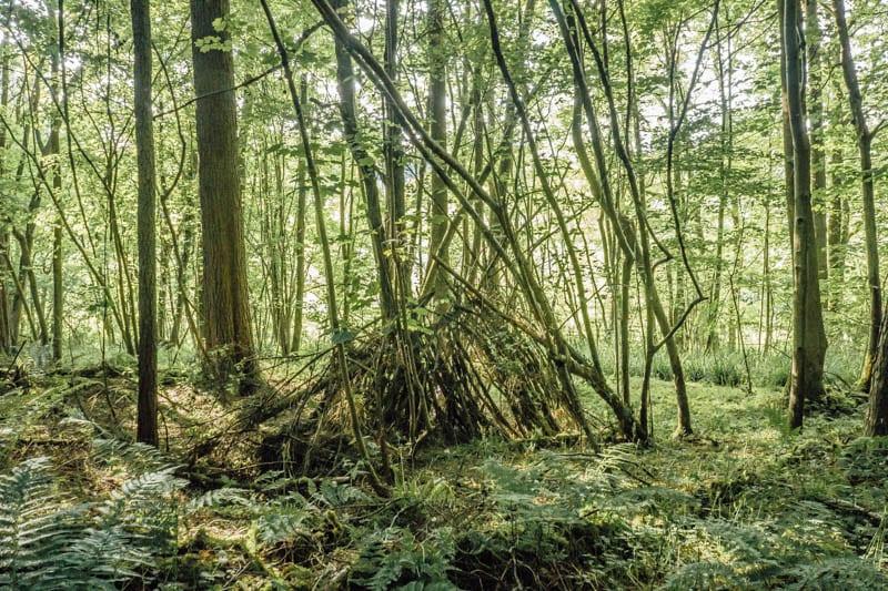 Kids den in the woods