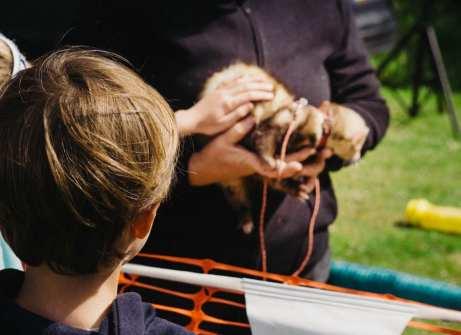 Theo stroking ferret