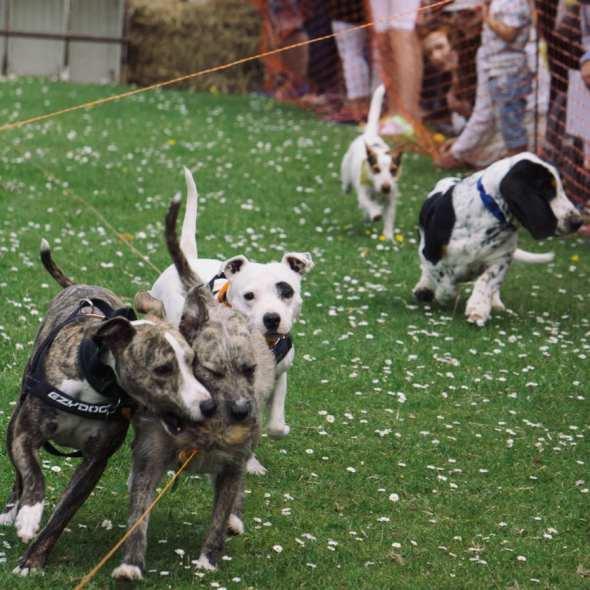 West Hoathly Country Fair Dog Race
