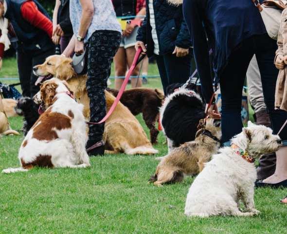Fun dog show at village fair