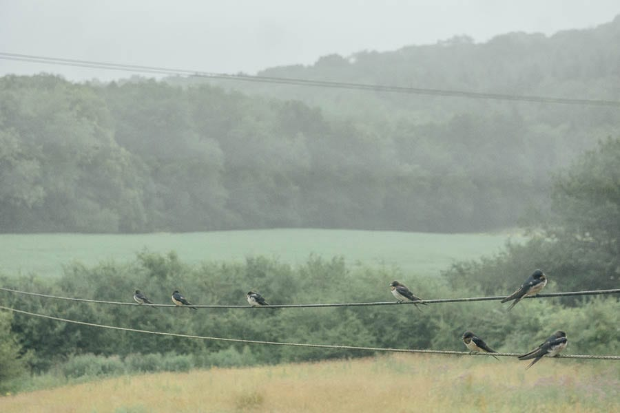 Swallows on wire and landscape