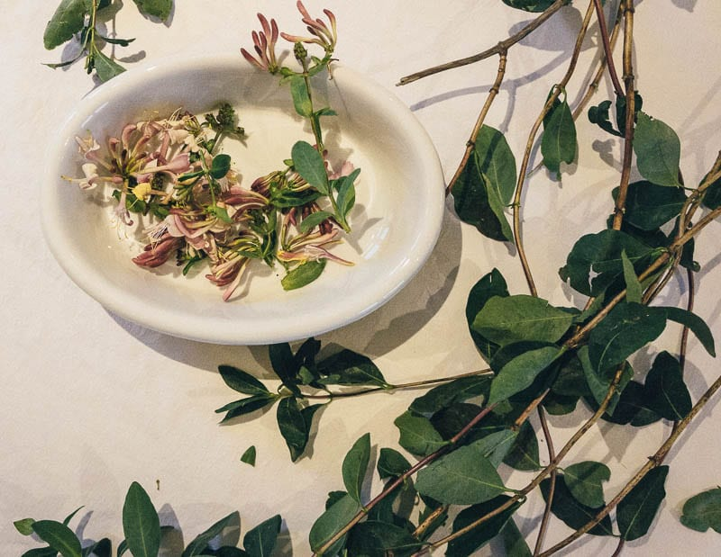 Honeysuckle flowers and vines