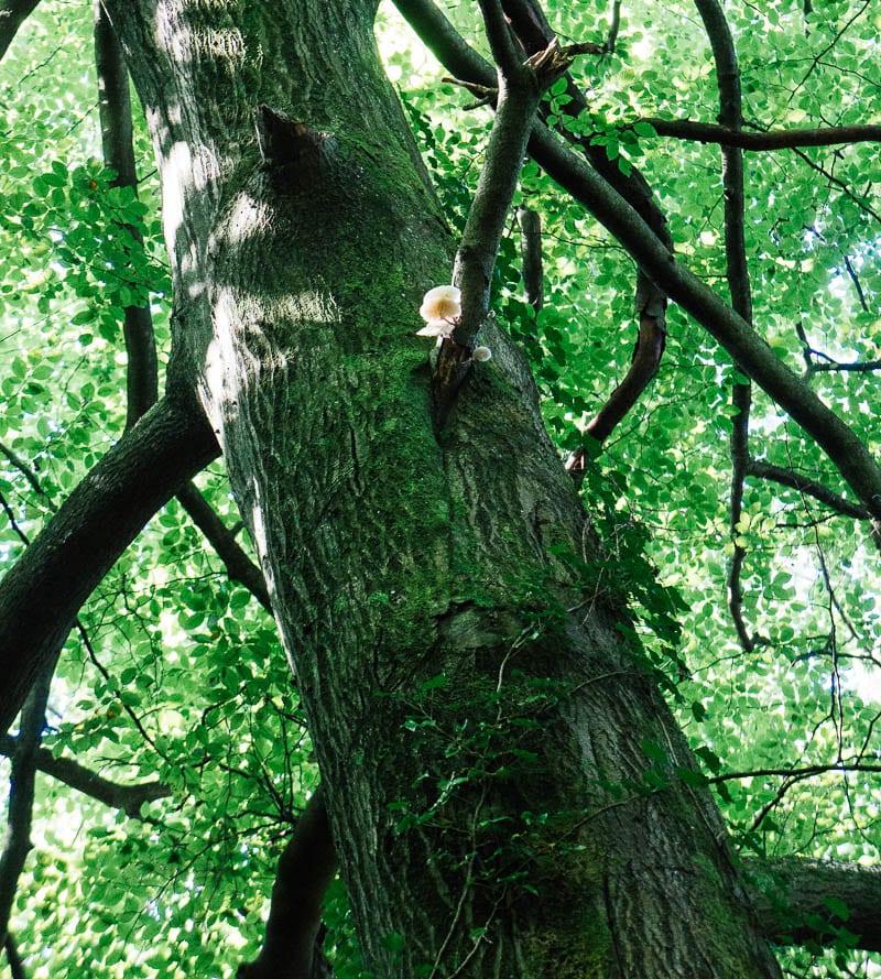 Fungus on tree trunk