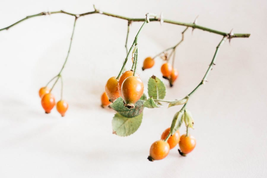Rosehips on white plate