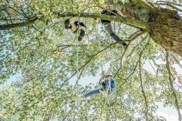 Tree climbing at Wakehurst