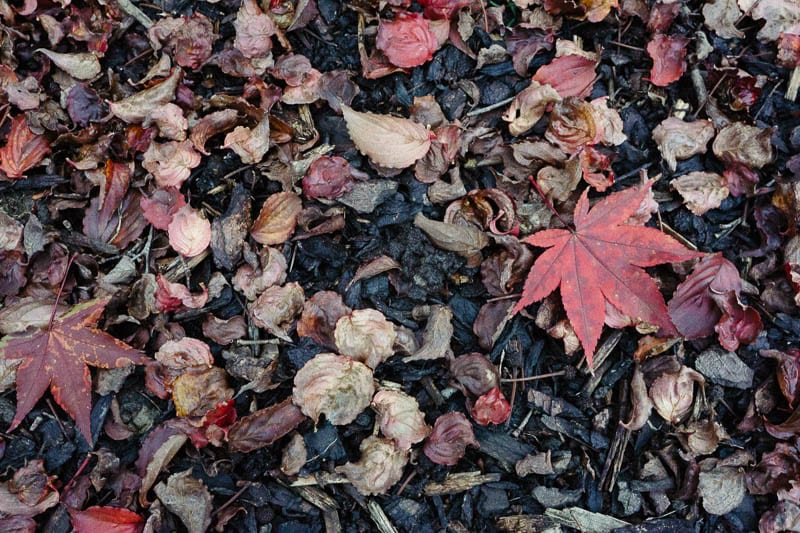 Autumn leaf colours brown red
