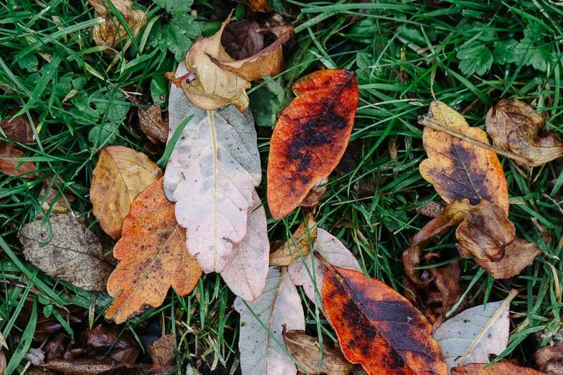 Autumn leaf colours mixed