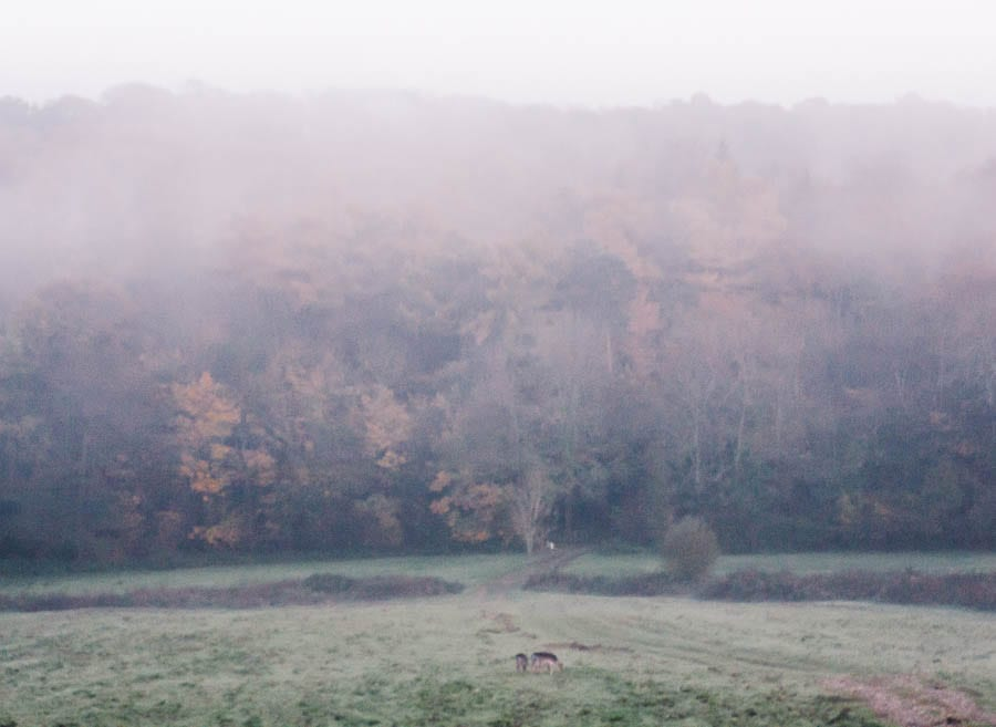 Landscape in rain and mist with deer