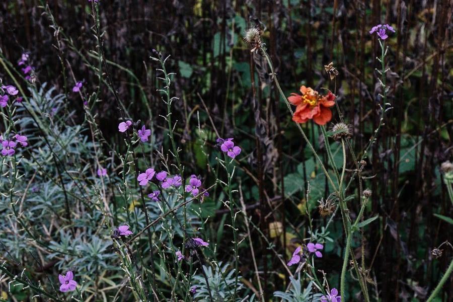 December garden colour
