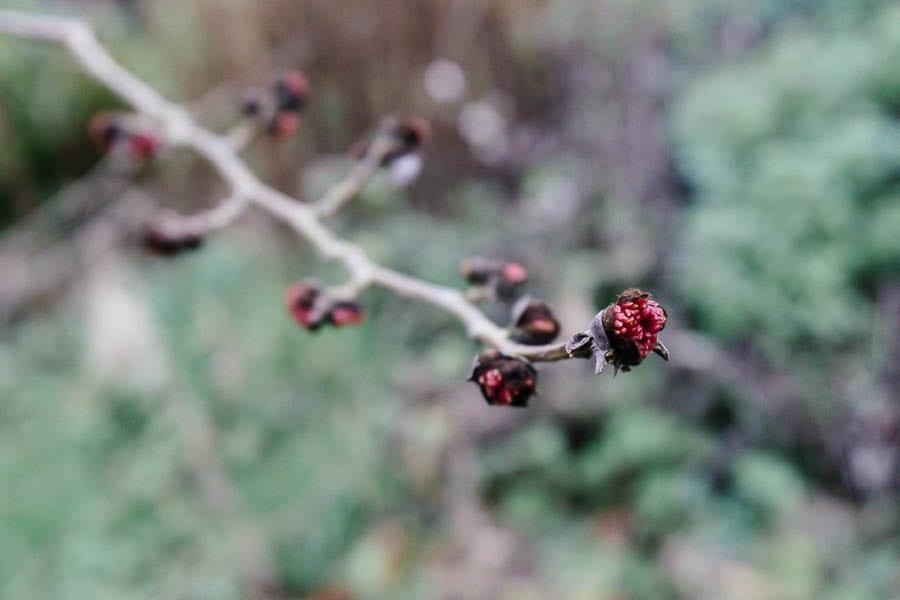 December garden tree buds