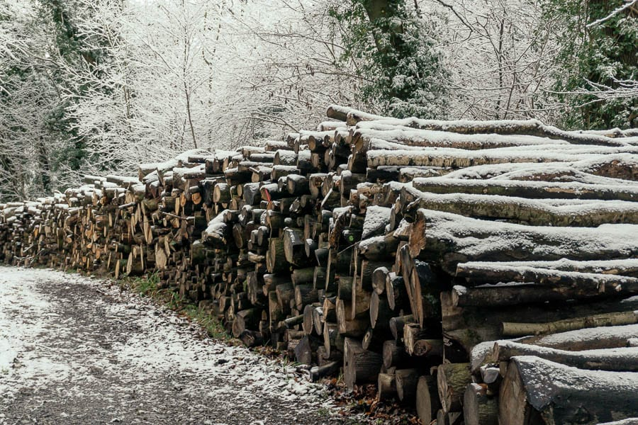 Log pile with snow in woods
