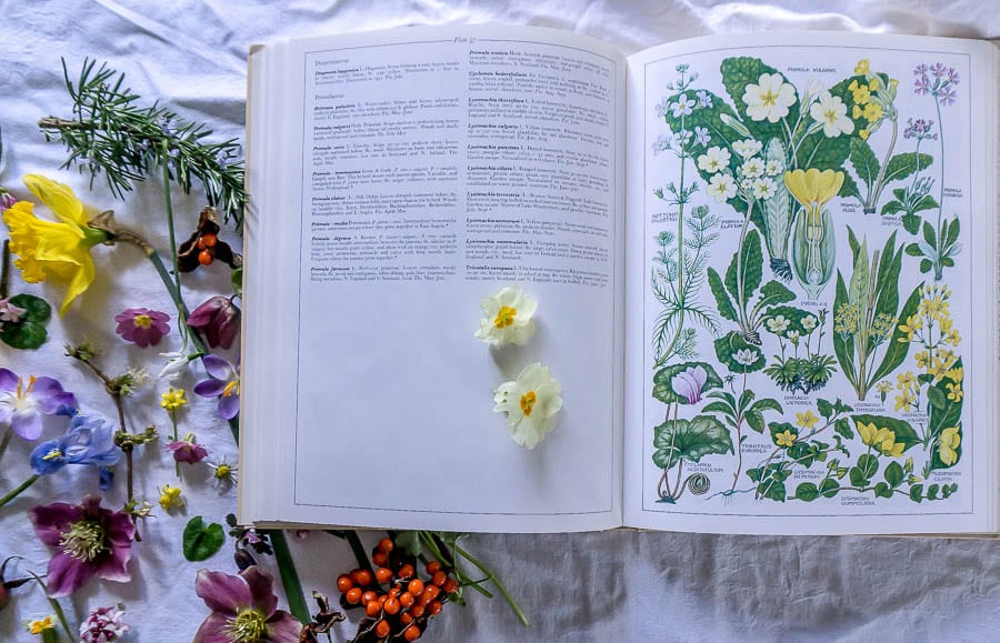 Flower Joy British Flora book primroses