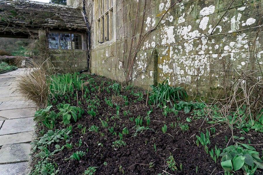 Gravetye February bulbs and plants in flowerbed