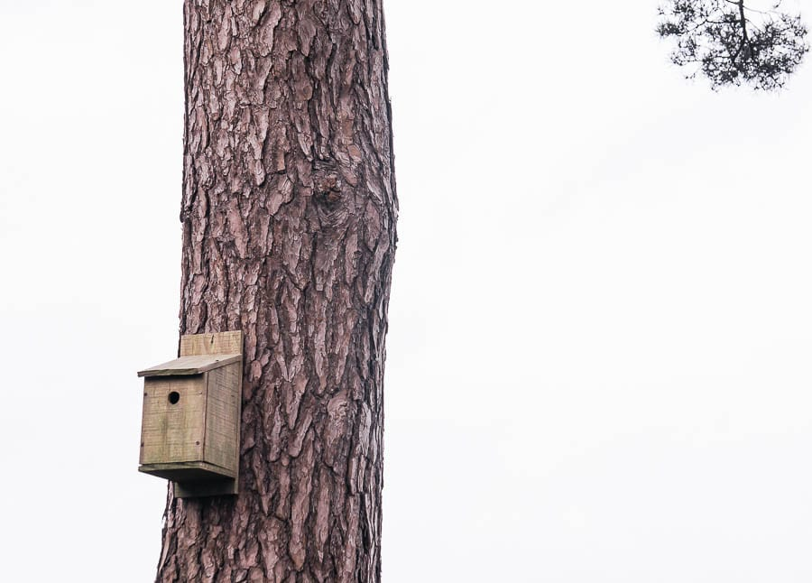 Natural bird box on tree trunk